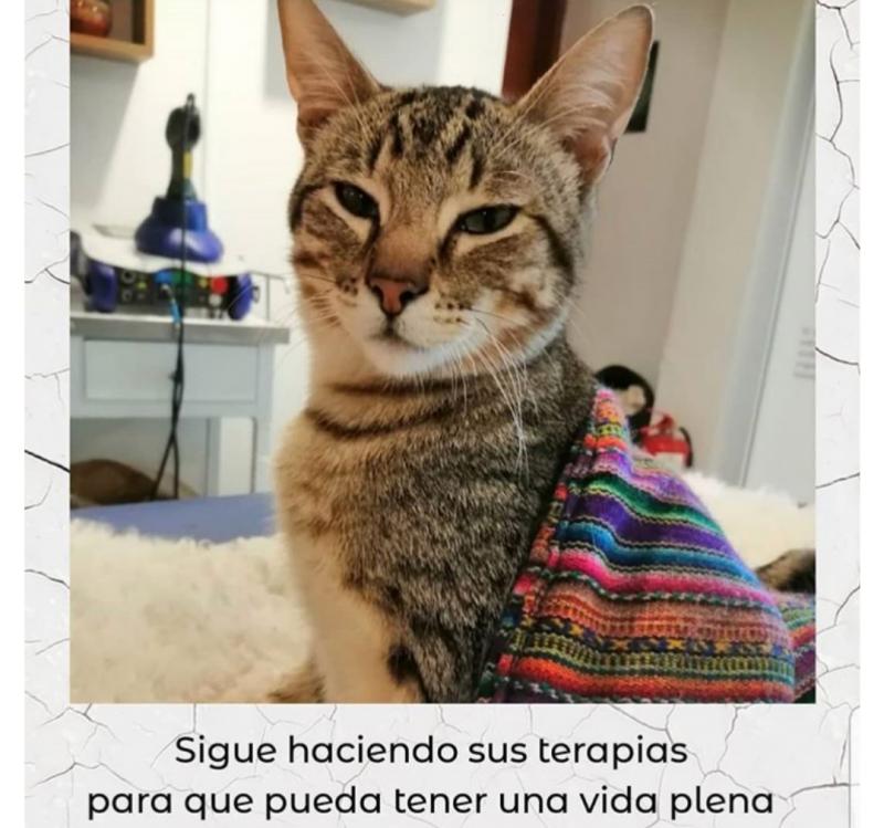 Cat Aktie
